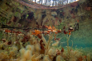 bron, beek, koud, helder, herfstbladeren in water