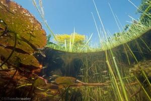 onderwaterfotografie, vijver, heldere vijver,
