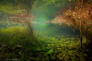 onderwaterfotografie, helder water, gezond water