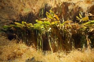 helder water, onderwaterfotografie, zuurstof
