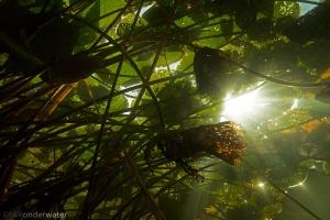 onderwaterfotografie, vijver, heldere vijver