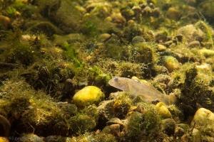 exoot, helder water, onderwaterfotografie