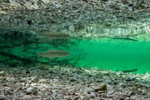 Thermoklien, kopvoorn, Bohinjsko jezero