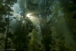 helder water, onderwaterfotografie, duiken, onderwaterfotografie, blikonderwater.nl, blik onder water, inundatie, uiterwaarden, onder water, overstroming, wildernisonderwater, wildernis onder water, rivierhout