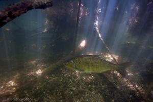 onderwaterfotografie, zoet water, helder water, winde, dood hout