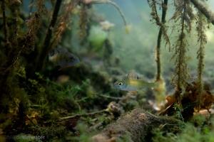 rivierhout, dood hout, structuur, natuurvriendelijke oever, KRW maatregel